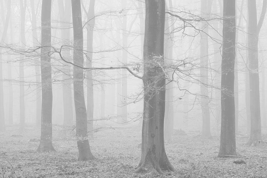 Winter's Whisper, Veluwe, The Netherlands