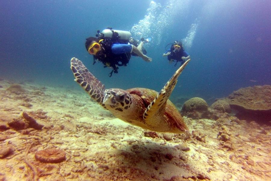 Turtle - Beachfront Divers - Koh Phi Phi, Thailand
