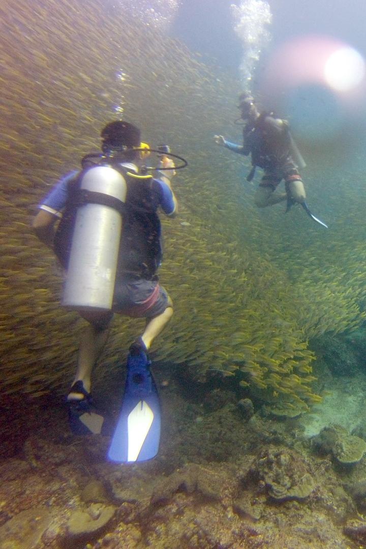 Yellow Snapper - Phi Phi Thailand - Beachfront Divers.jpg