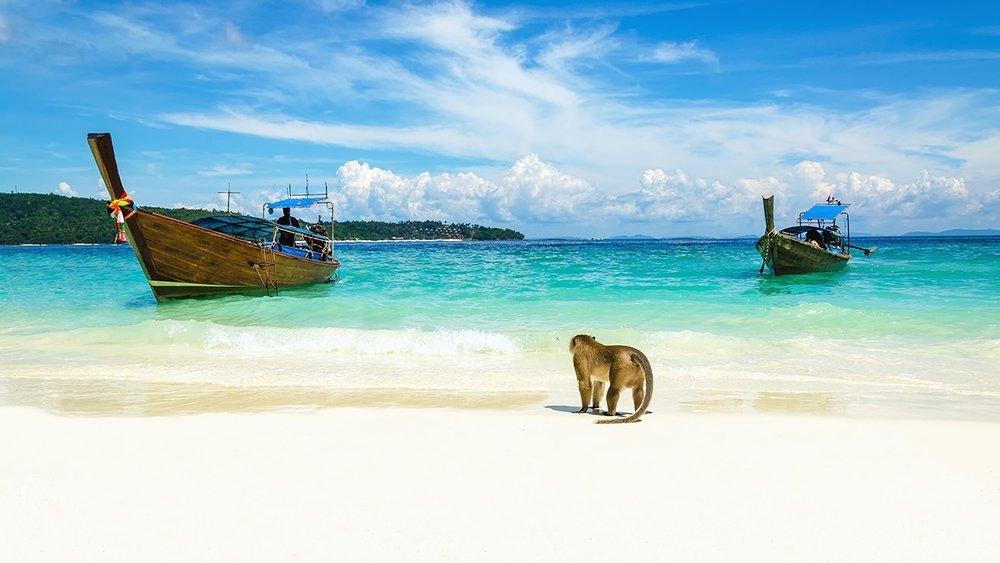 Monkey Beach.jpg
