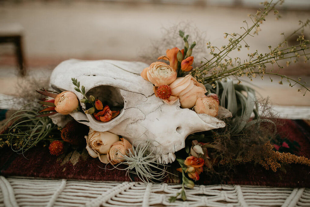 Small Cow Skull Without Horns 1 - Provenance Vintage Rentals Los Angeles Bohemian Wedding Decor Rental Romantic Wedding Inspiration Boho Wedding Decor Desert Wedding Prop Rentals Prop Styling Los Angeles
