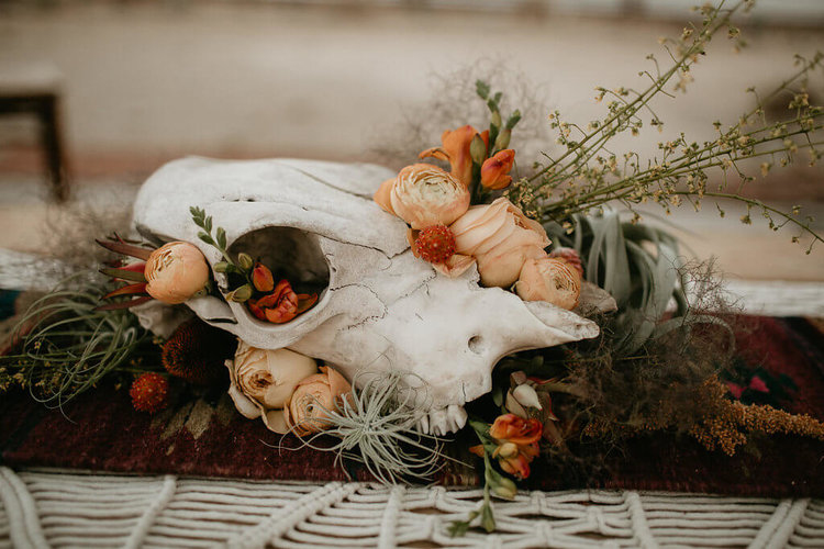 Small Cow Skull Without Horns Provenance Rentals