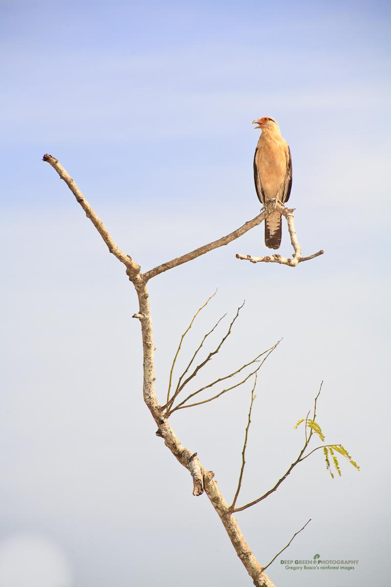 DGPstock-birds-18.jpg
