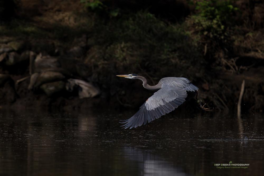 DGPstock-birds-99.jpg