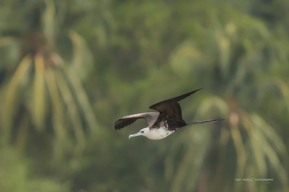 DGPstock-birds-138.jpg