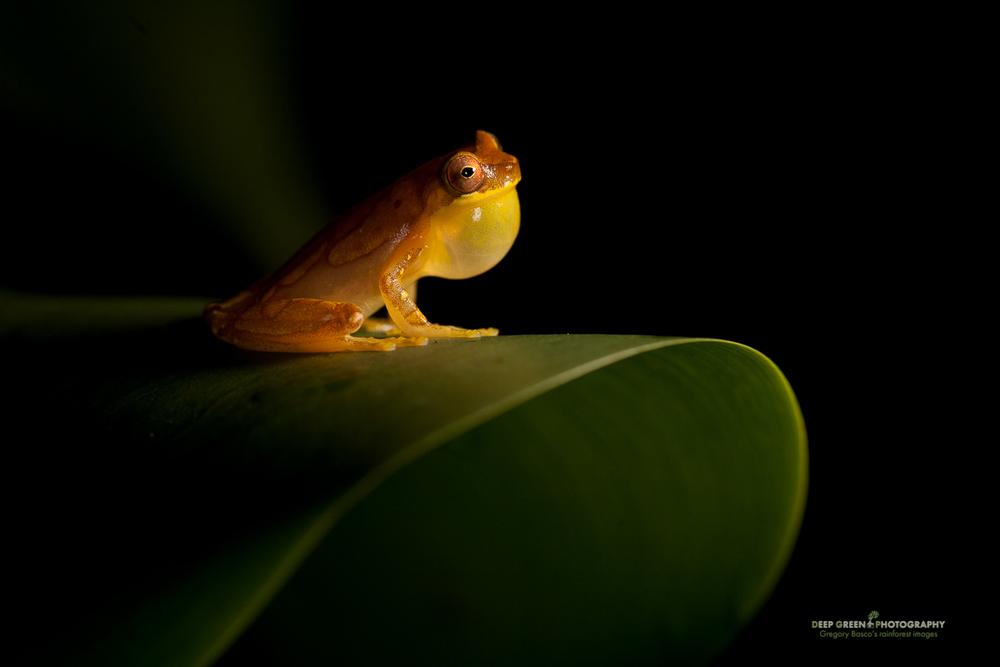 DGPstock-frogs-29.jpg