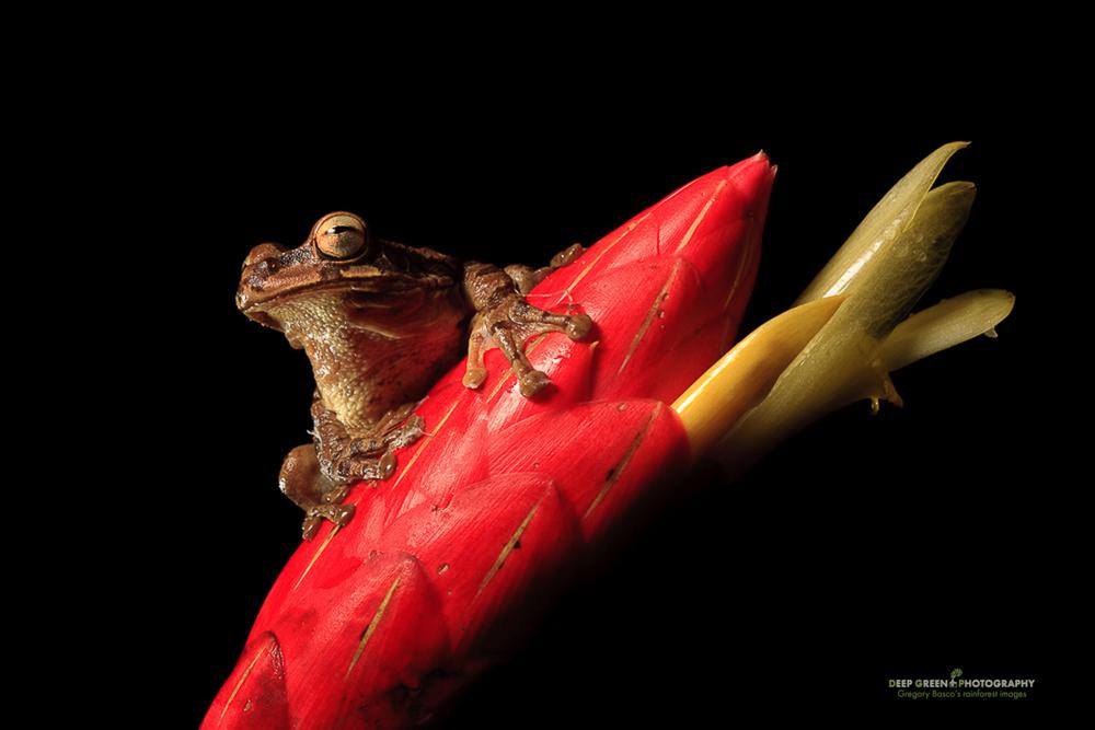 DGPstock-frogs-43.jpg