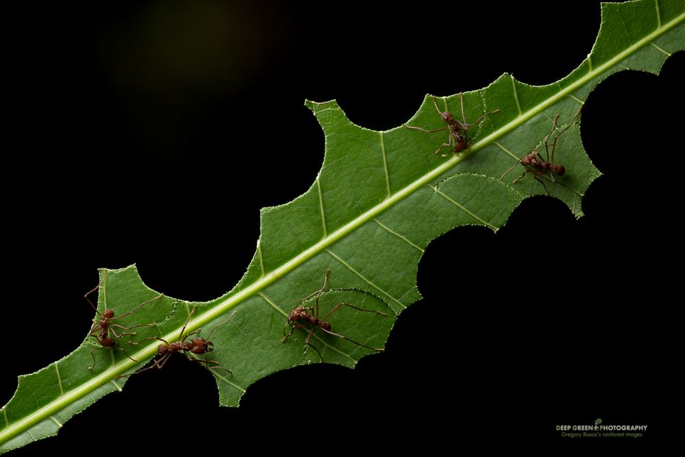 DGPstock-invertebrates-8.jpg
