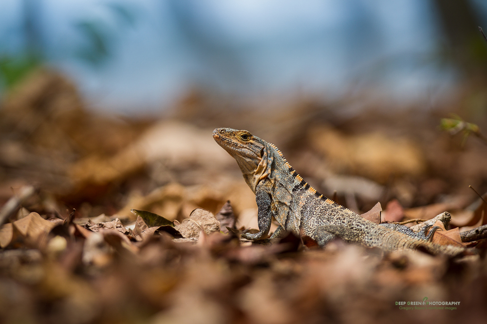 DGPstock-reptiles-8.jpg
