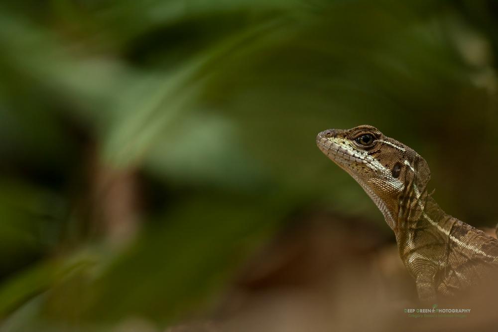 DGPstock-reptiles-75.jpg