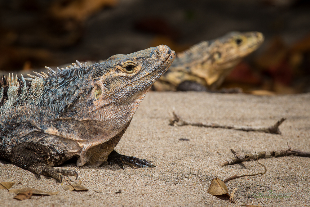 DGPstock-reptiles-16.jpg