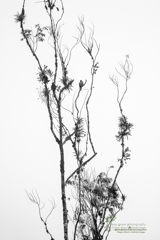 DGPstock-birds-157.jpg
