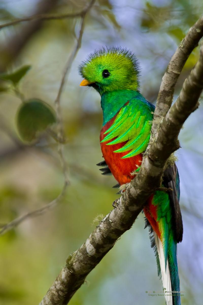 DGPstock-birds-6.jpg