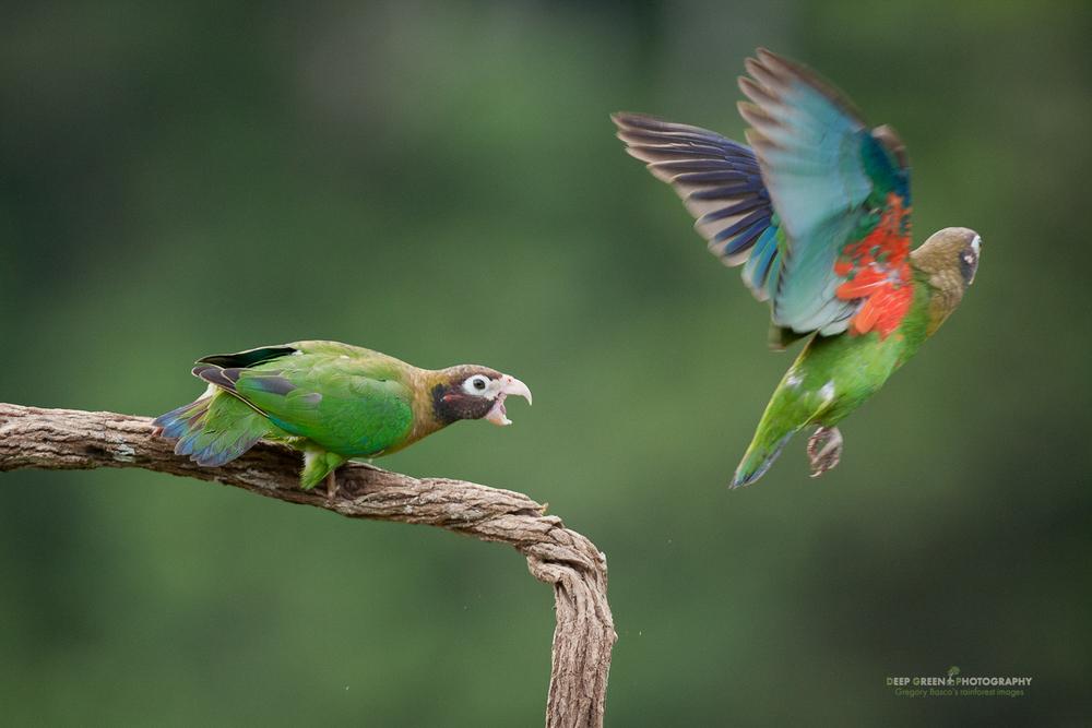 DGPstock-birds-28.jpg