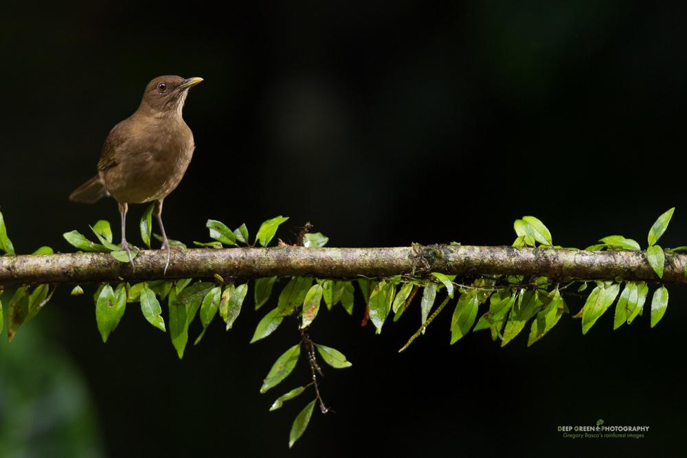 DGPstock-birds-64.jpg