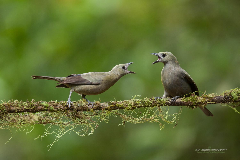 costa rica tropical bird photography february 2018 u2014 foto verde