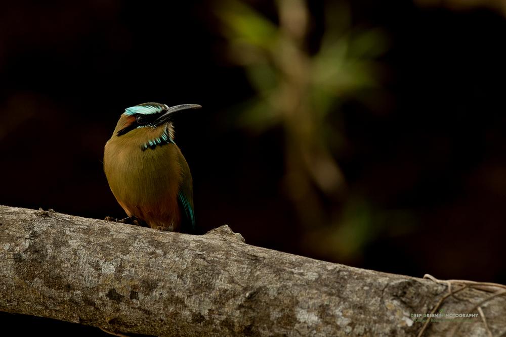DGPstock-birds-133.jpg