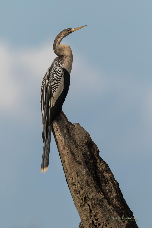 DGPstock-birds-137.jpg