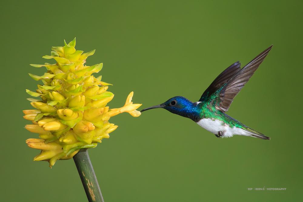DGPstock-hummingbirds-94.jpg