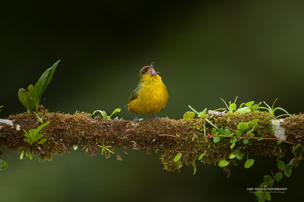 DGPstock-birds-14.jpg