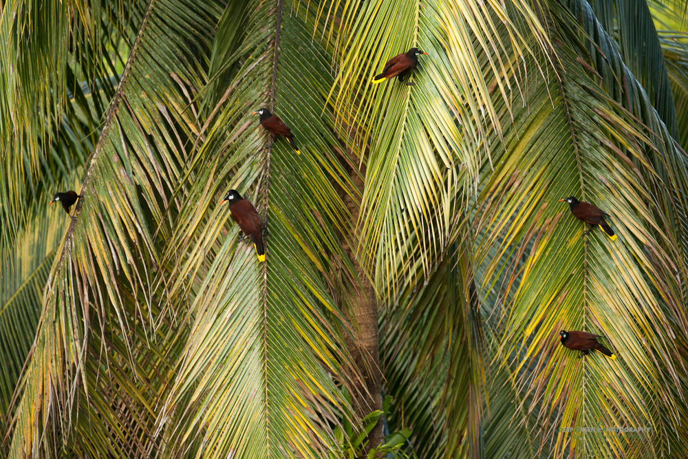 DGPstock-birds-76.jpg