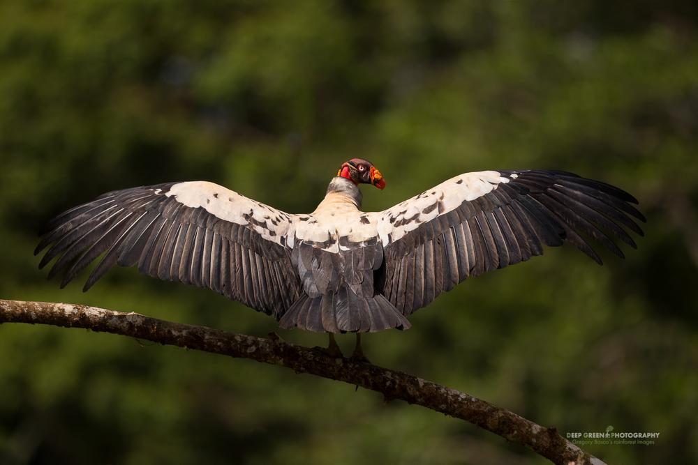 DGPstock-birds-117.jpg