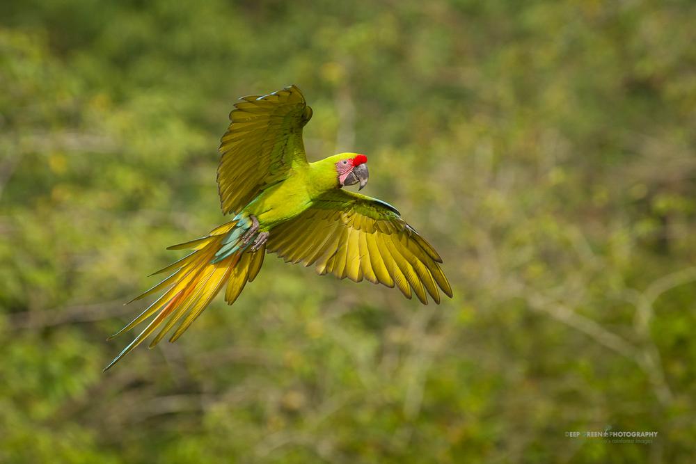 DGPstock-birds-95.jpg