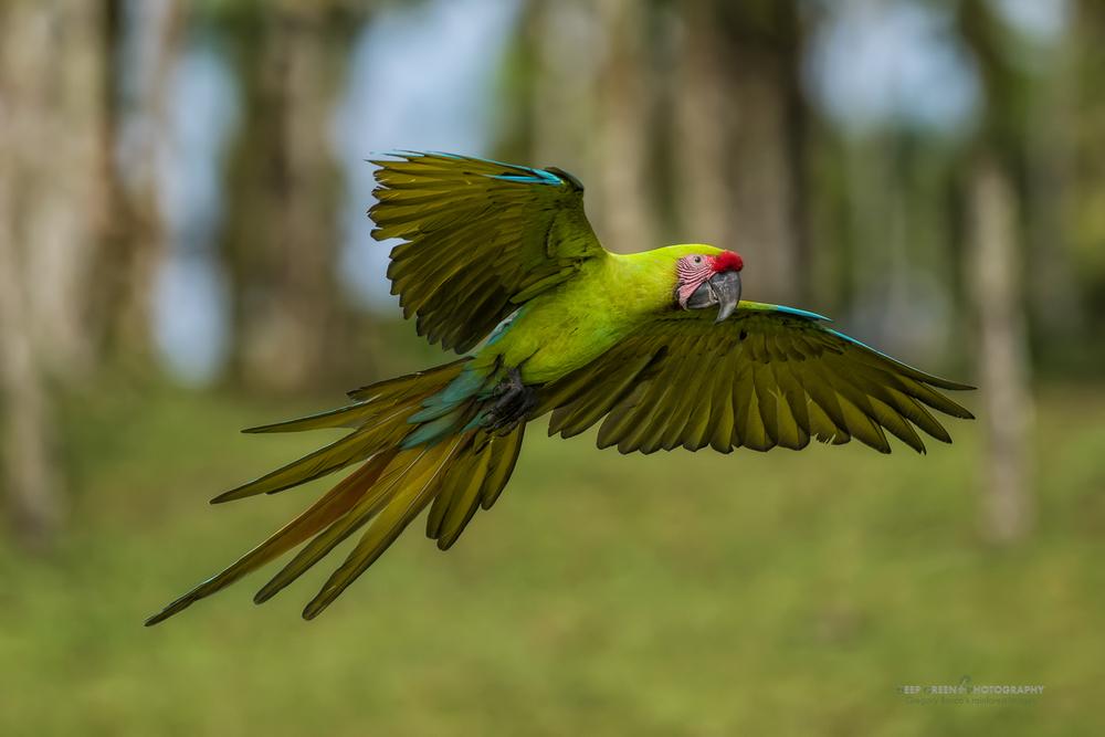 DGPstock-birds-128.jpg