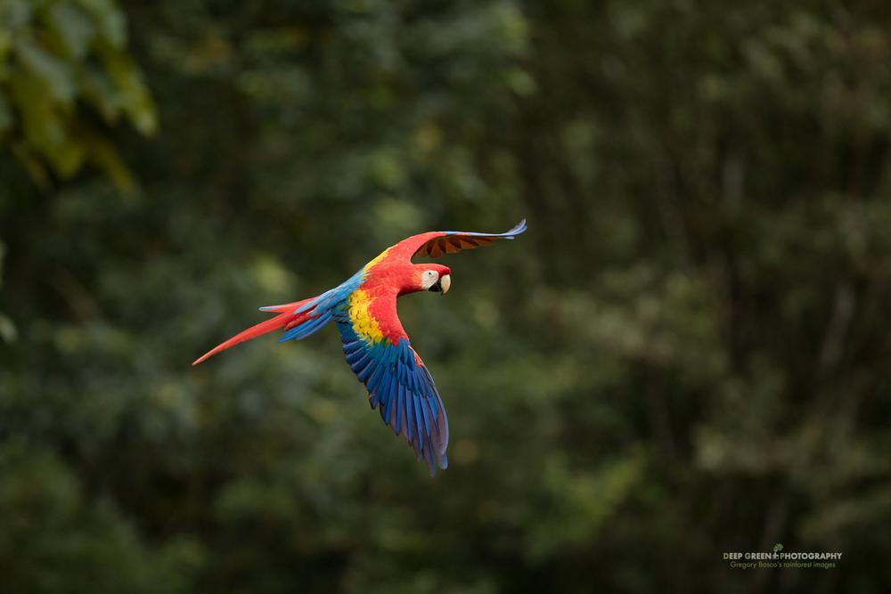 DGPstock-birds-170.jpg