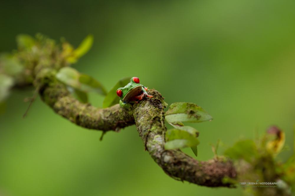 DGPstock-frogs-21.jpg