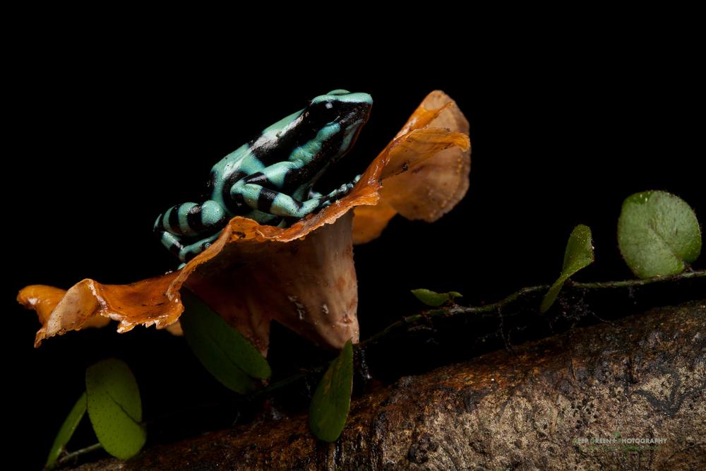 DGPstock-frogs-37.jpg