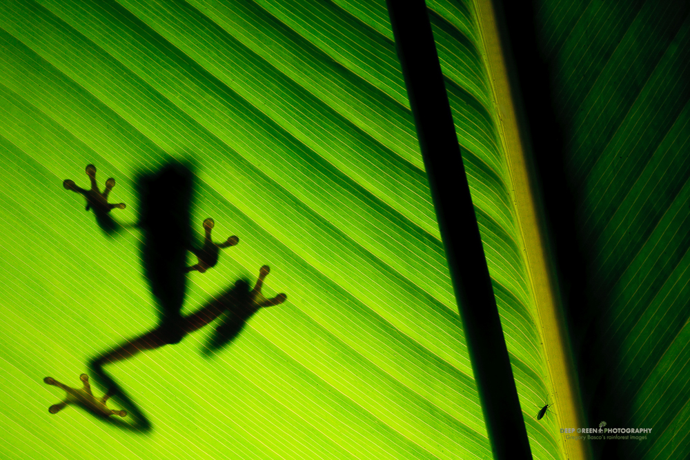 DGPstock-frogs-44.jpg