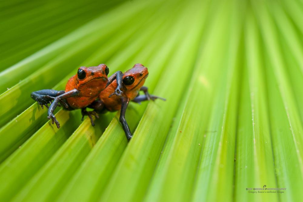DGPstock-frogs-46.jpg