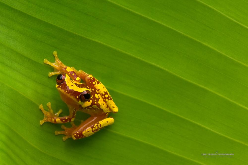 DGPstock-frogs-58.jpg