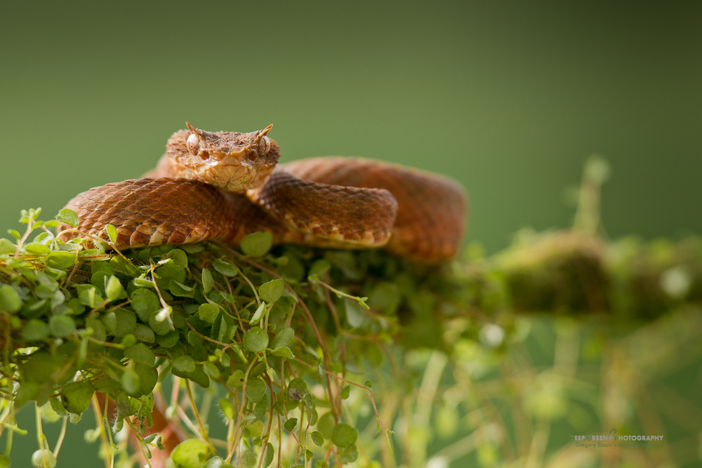 DGPstock-reptiles-54.jpg
