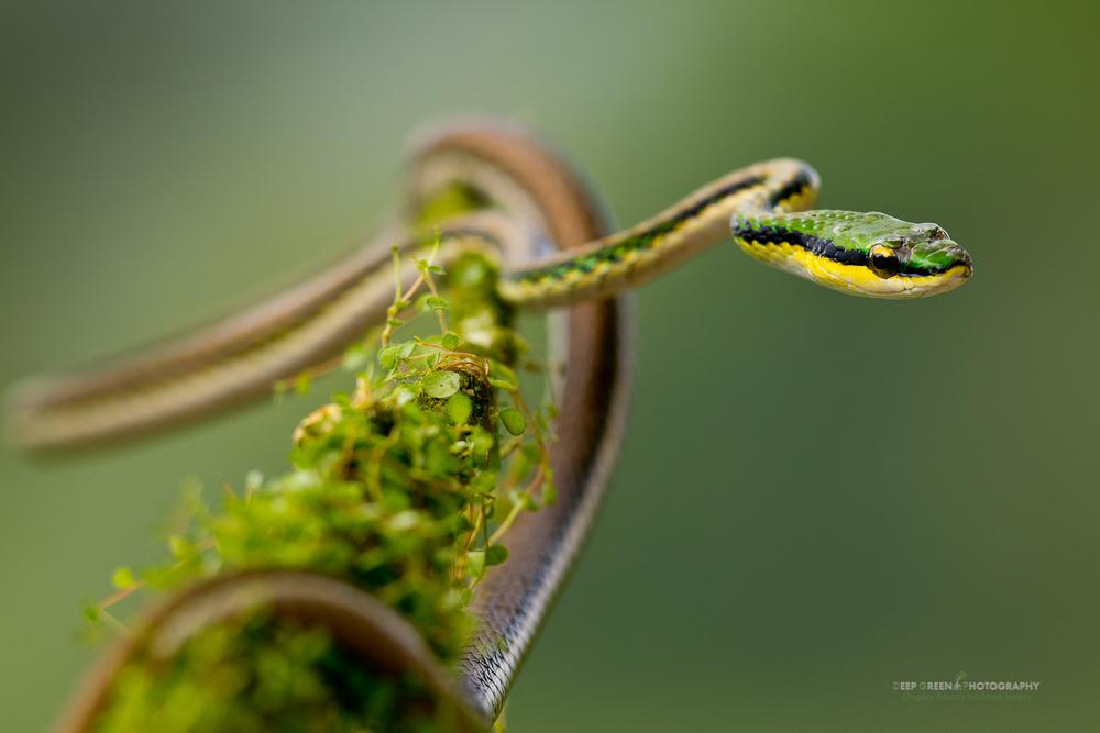 DGPstock-reptiles-55.jpg