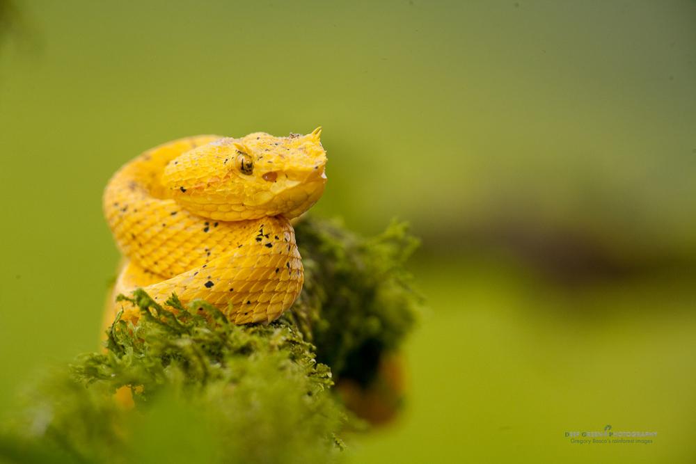 DGPstock-reptiles-56.jpg