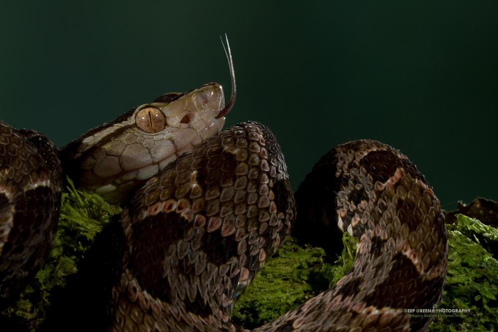 DGPstock-reptiles-69.jpg