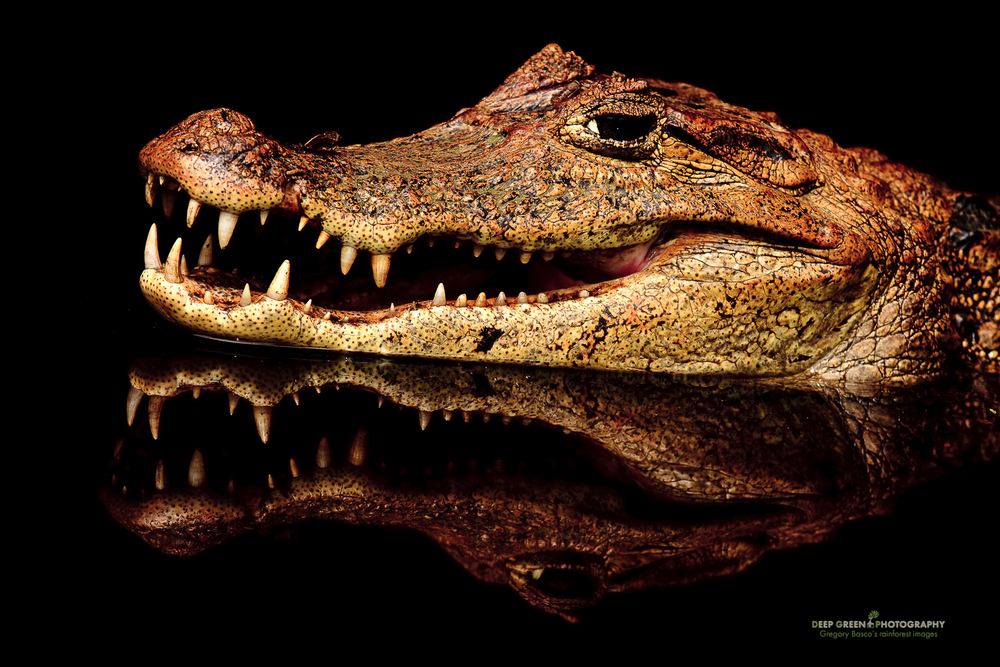 DGPstock-reptiles-10.jpg