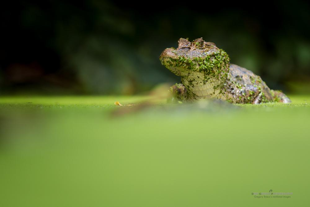 DGPstock-reptiles-27 (1).jpg