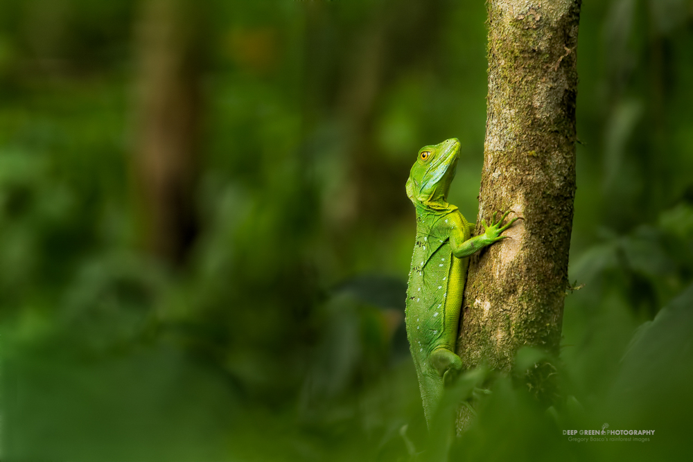 DGPstock-reptiles-32.jpg