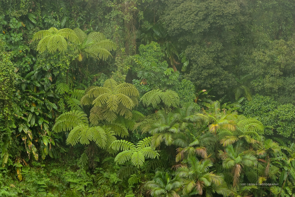 DGP Costa Rica landscapes-48.jpg
