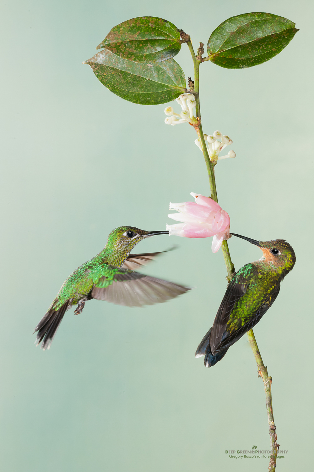 DGPprints-pollination3.jpg