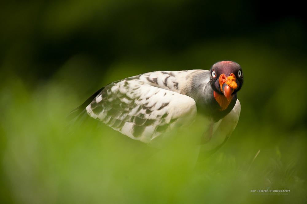DGPstock-birds-26.jpg