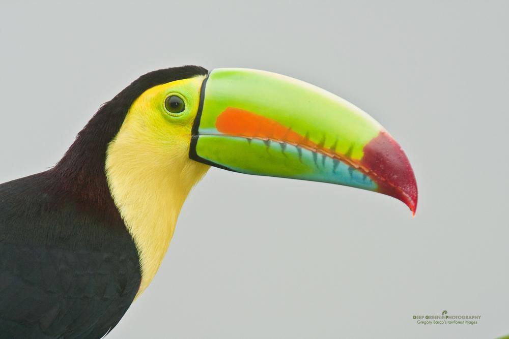 DGPstock-birds-25.jpg