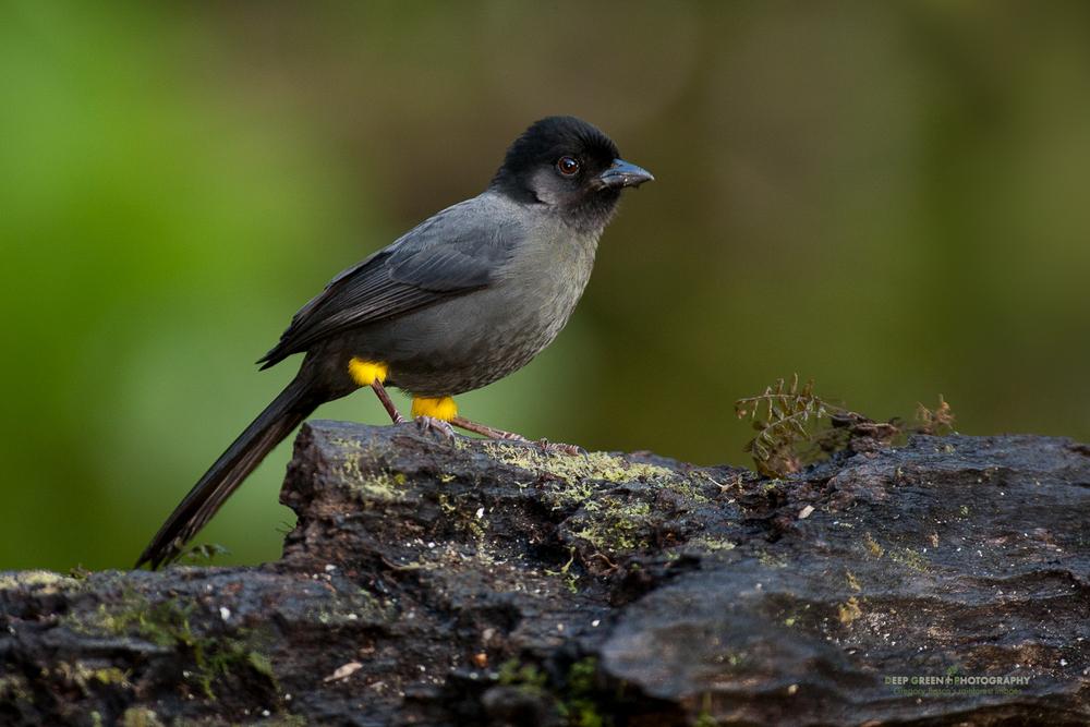 DGPstock-birds-54.jpg