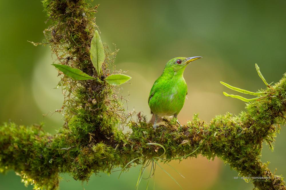 DGPstock-birds-92.jpg