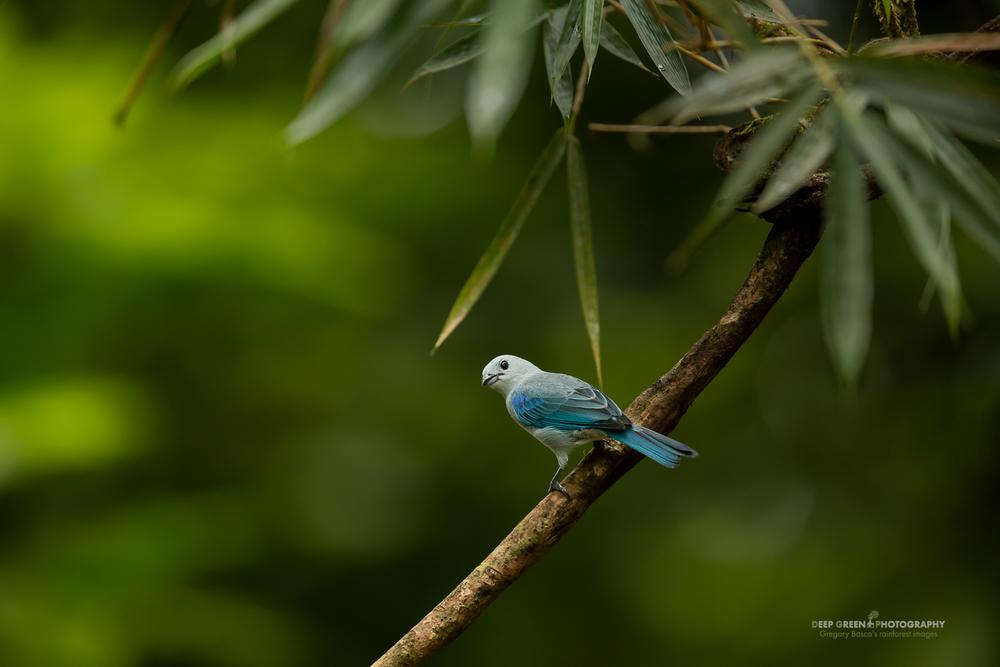 DGPstock-birds-160.jpg