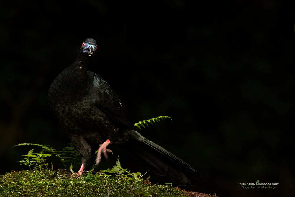 DGPstock-birds-165.jpg