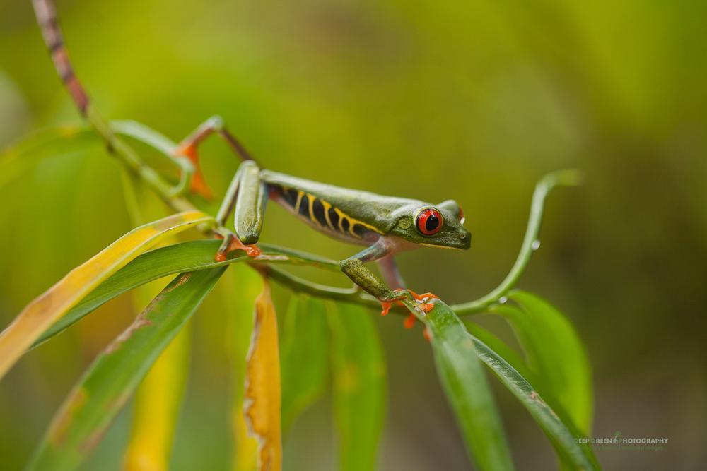 DGPstock-frogs-24.jpg